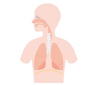 肺炎、気管支炎、気管支喘息、肺気腫、など